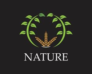 Wheat rice nature logo design vector illustration