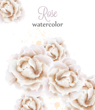 Watercolor white roses isolated Vector. Beautiful floral delicate decors