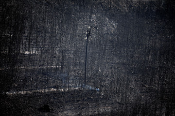 An electricity pole stands among burnt trees following a wildfire in Neos Voutzas
