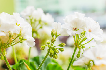 White flowers on a green background.
