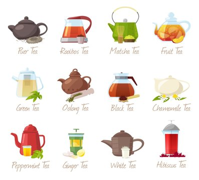 Tea vector puer-tea and rooibos or matcha fruity drinks in teapot illustration drinking set of green or black tea in cafe isolated on white background