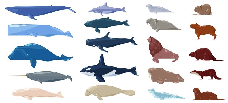 Sea mammal vector water animal character dolphin walrus and whale in sealife or ocean illustration marine set of sea-lion or sea-cow and seal or otter illustration set isolated on white background