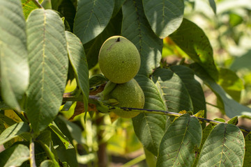 Bahçede yetişen sebze ve meyveler