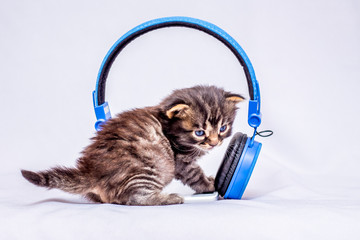 A little kitten listening to the sounds of the music near the headphones. Headphones for listening to your favorite music_