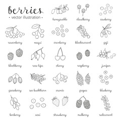 Hand drawn outline berries isolated on white background.