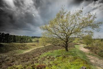 Landschaft im Naturpark Aukrug