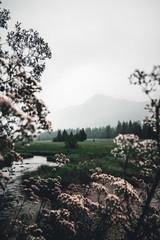 Weitsee mit Nebel am Morgen mit blick auf das  Dürrnbachhorn