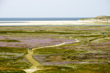 View from the top of a dune towards the Slufter nature reserve on the Dutch island of Texel, with a sandpath meandering through fields of sea lavender and other vegetation Wall mural