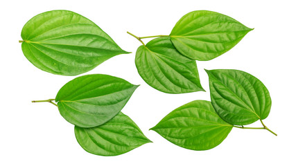 Green betel piper leaf on a white background. Wall mural