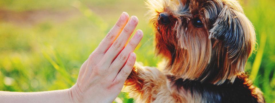 Dog gives paw