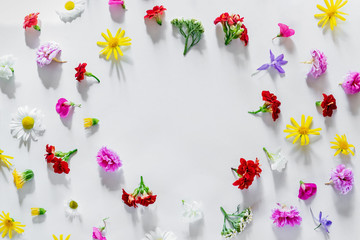 Various colorful spring flowers creating pattern on white background. Flat lay summer natural concept. Free space