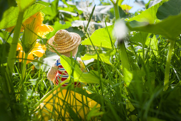 Dreaming Cutie in the Garden / Rear view of cute dreamy little teddy bear, sitting with sailor suit and sun hat at top of pumpkin in summery big garden jungle between tall plants