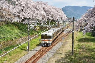 春の御殿場線 桜の回廊