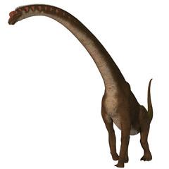 Giraffatitan Dinosaur on White - Giraffatitan was a herbivorous sauropod dinosaur that lived in Africa during the Jurassic Period.