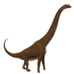 Giraffatitan Dinosaur Side Profile - Giraffatitan was a herbivorous sauropod dinosaur that lived in Africa during the Jurassic Period.