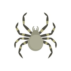 Tarantum spider icon. Flat illustration of tarantum spider vector icon for web isolated on white