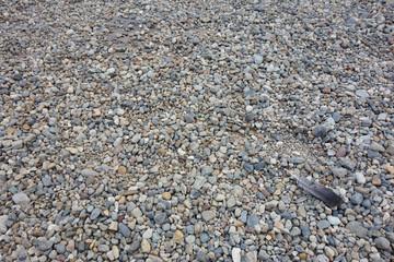 敷き詰められた小石と鳥の羽 Paddled stone and bird's feather