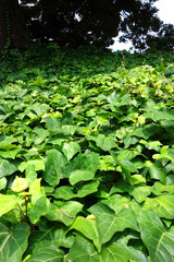 植物の絨毯 Lively plants