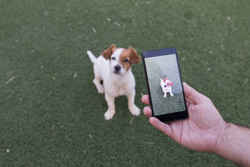 man hand with mobile smart phone taking a photo of a cute small dog over green grass background. Outdoors portrait. Happy dog looking at the camera.