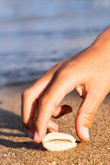 Child's hand reaches for a cowrie on the beach