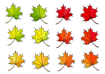 Maple Leaves. Canadian Day Symbol. Autumn or Fall Harvest Collection. Realistic Hand Drawn High Quality Vector Illustration. Doodle Style.