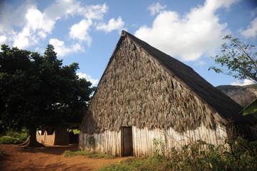 Tobacco plantation and farm n Vinales Valley,Cuba.