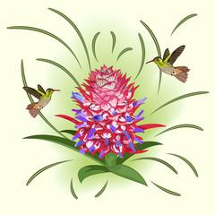 Flowering pineapple and hummingbirds