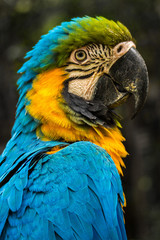 Portrait of a parrot, Ciawi, West Java, Indonesia