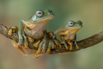 Close up of frogs on branch
