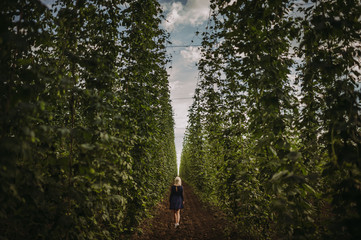 Woman walking through a hop field, Serbia