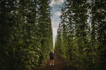 Woman standing in a hop field, Serbia