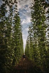 Woman running through a hop field, Serbia