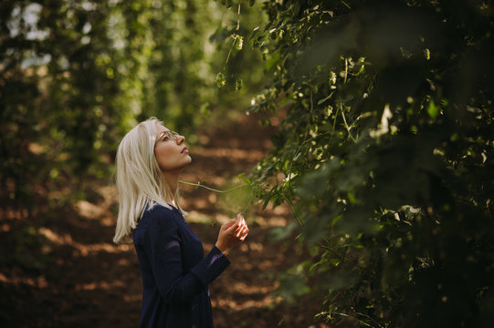 Woman checking  hop plants in a field, Serbia