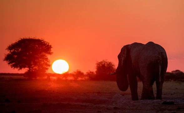Silhouette of an elephant at sunset, Botswana