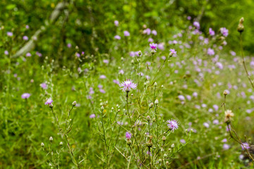 Wild Flowers, Beautiful All Natural Wild Growing Flowers