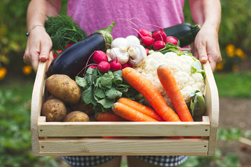 Woman is holding wooden crate full of vegetables in garden