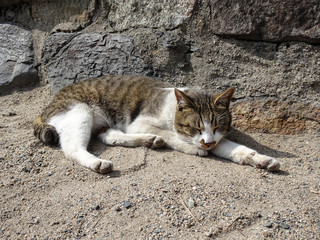 Cat Lying in the Precincts of a Fukuoka Shrine