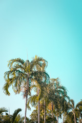 Green palm trees against clear blue sky. Minimal. Copyspace