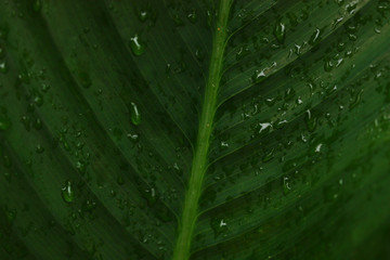 green leaf with water drops for background.