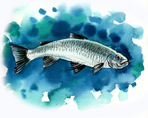 Watercolor sketch of a fish in water