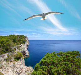 Seagull over cliffs in Telascica Nature Park, Dugi Otok island in the Adriatic sea. Croatia.