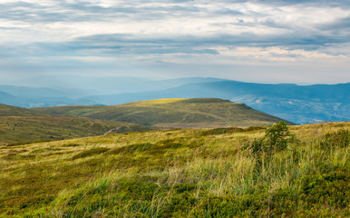 Carpathian alpine meadows in august. lovely summer landscape on a cloudy day. yellow weathered grass