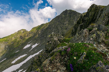 grass and some purple flowers on a rocky cliffs of Fagaras mountains in Romania. beautiful summer weather with clouds on a blue sky