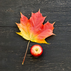 Red and yellow maple leaf and apple