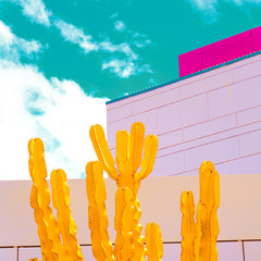 Colorful Cactus art. Cacti lover concept