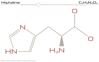 Large and detailed infographic of the molecule of Histidine