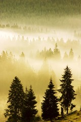 Morning mist, Sesul Garzii, Bihor Mountains, Parcul Natural Apuseni, Romania, Europe