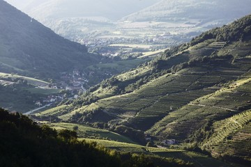 Vineyards in the Spitzer Graben valley and the municipality of Viessling, Wachau valley, Waldviertel region, Lower Austria, Austria, Europe