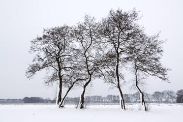 Landscape in winter with snow and common alder trees (Alnus glutinosa), Naturschutzgebiet nature reserve Oberalsterniederung, Schleswig-Holstein, Germany, Europe
