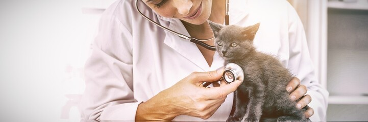Vet examining kitten with stethoscope